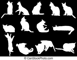 White cat on the black background