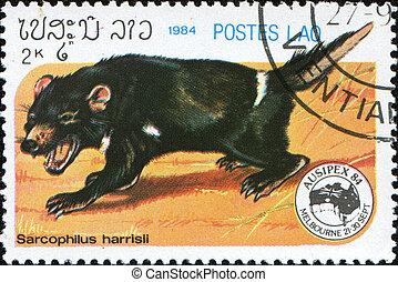 Tasmanian devil - LAOS - CIRCA 1984: A stamp printed in Laos...