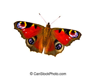 butterfly on white background with room for text