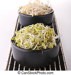 soy bean sprout - appetizer, soy and radish bean sprout