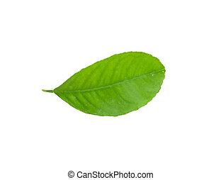 leaf of lemon - Lemon leaf isolated on white background