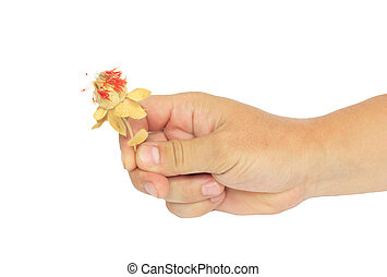 Hand with dried flower on a white background