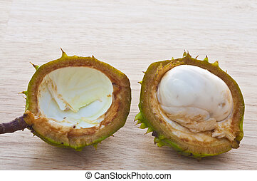 White conker in shell on a table - Unripe Conker in shell on...