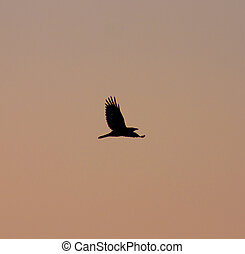 silhouette of a bird at sunset