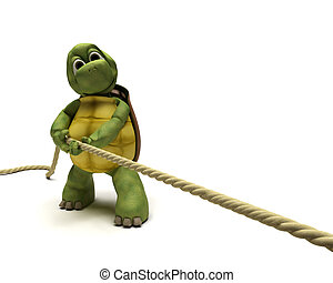Tortoise pulling on a rope
