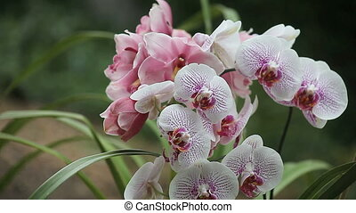 two orchids - spotted white and magenta orchid in front of a...