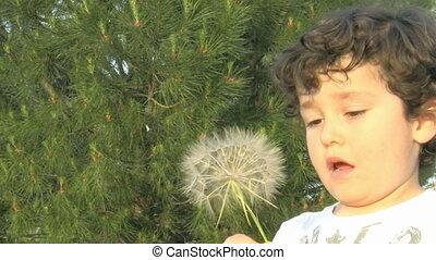 Little boy blowing a dandelion
