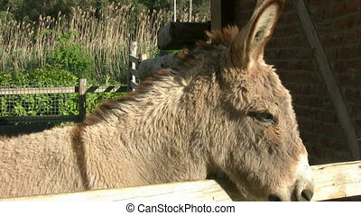 Donkey in Farm