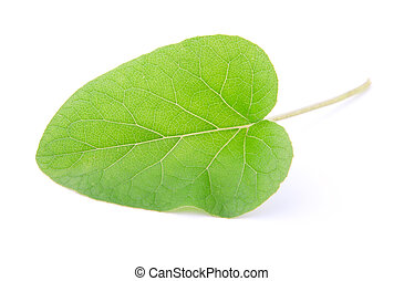 one leaf of burdock, isolated on a white background