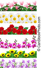 set of flowers background