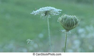 herb 10 - wild herbs