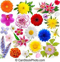 jogo, flores