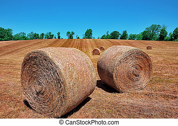 Haymaking - Haystacks in the field after a haymaking