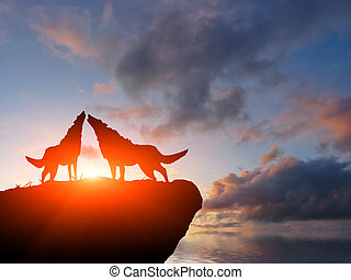 two wolves on a mountain top