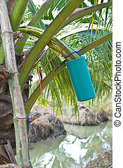 coconut sugar
