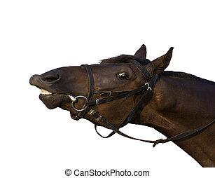 divertido, caballo, primer plano, probar, comer, rama