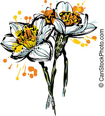 three flowers of narcissus - beautiful color picture three...