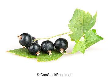 blackcurrant isoalted on white
