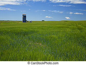 wheat field and grain elevator - grain elevator in the...