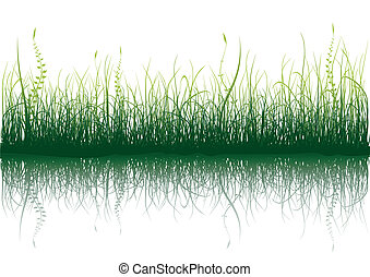 Green Grass - isolated on white