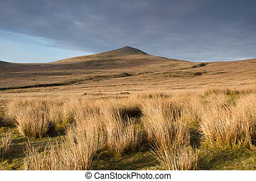 Mountain moorland. - Dried grass tufts on moorland leads to...