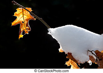 Lone Leaf with Snow
