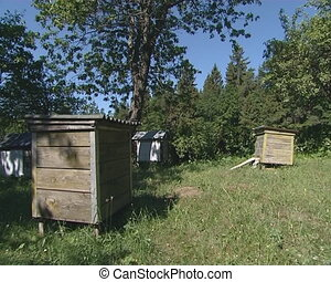 Beekeeping. Hives and bees - Beekeeping. Hives in the garden...