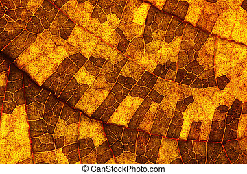 Closeup of a leaf changing color