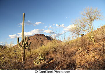 Saguaro and Mountains - A Saguaro in the Sonora Desert and...