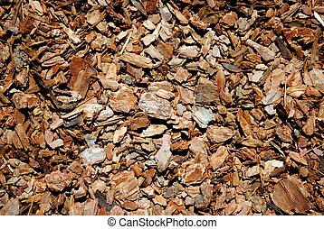 bark pinewood background