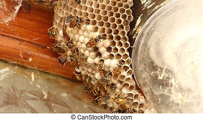 Bees   - Bees inside a beehive