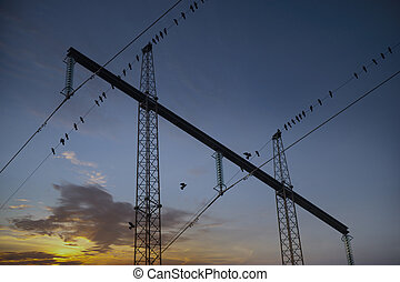 Migrating birds in electricity pylon at sunset