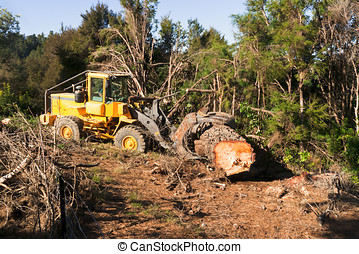Moving the Logged Tree