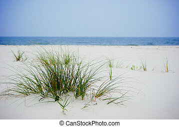 Grass on the Beach - A patch of green grass on the a beach...