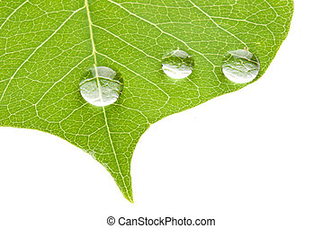 Green leaf with transparent water drop