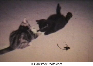 Kittens Playing 1968 - Vintage - Adorable kittens play in...
