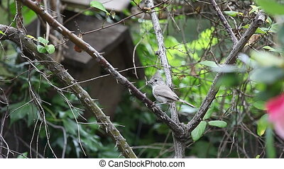 songbird with insect - a tufted titmouse with an insect in...