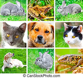 Collage of animals images. ( cat, dog, lizard, frog, rabbit...