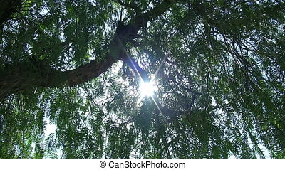 Tree and Sun Full hd 1080p