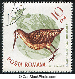 Eurasian woodcock - ROMANIA - CIRCA 1965: stamp printed by...