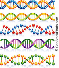 DNA - Vector illustration - DNA strands