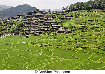 Rice Terraces - Large rice terraces with ethnic Chinese...