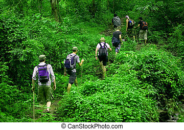 Jungle hike - Group of trekkers hike through lush green...
