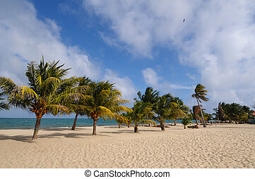 Beach and palm trees - Beach with the palm trees in Belize,...
