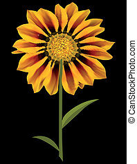 Sunflower Over Black. Vector - sunflower isolated over...