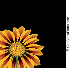 Sunflower Over Black. Vector - sunflower isolated over...