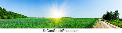 Splendid spring field - Rural footpath and spring field with...