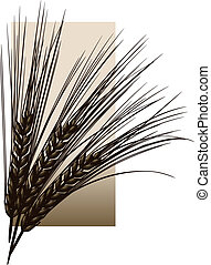 Barley - Wheat or barley against a sepia rectangle