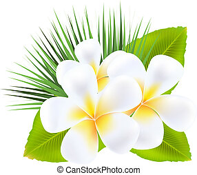 Frangipani, Isolated On White Background, Vector...
