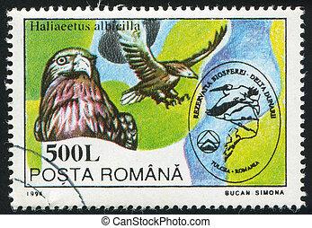 Haliaeetus albicilla - ROMANIA - CIRCA 1994: stamp printed...